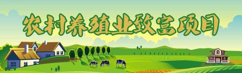 农村电商背后的农村致富好项目推荐.png