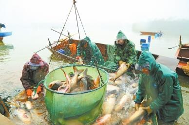 农村生态养殖项目:生态养鱼!.jpg